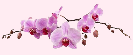 orkide_mfh